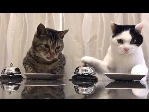 Bikin Gemes, Video Kucing Lucu Dan Imut Terbaru  2019