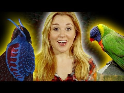 Top 10 Crazy Coloured Animals - Earth Unplugged