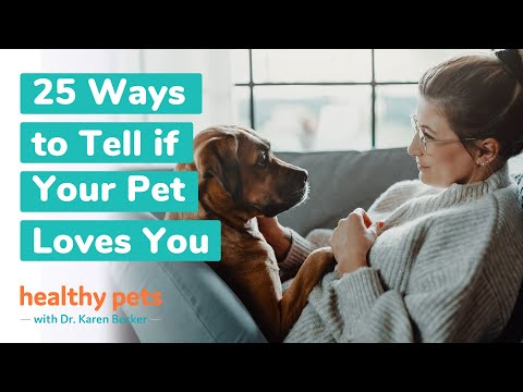 25 Ways to Tell if Your Pet Loves You