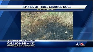 Humane Society seeking information after charred dog remains found in New Orleans East