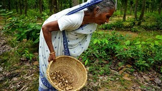 VERY VERY TASTY WILD MUSHROOM searching by Grandmother and Cooking in Village Style