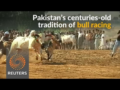In the face of insurgencies, bull racing is a welcome distraction in Pakistan