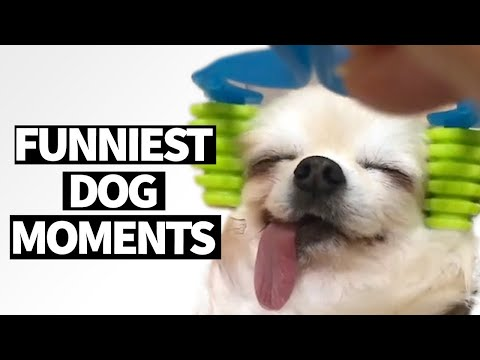 Hilarious Dog Viral Videos | Ultimate Dog Compilation 2019 - UCzSSoloGEz10HALUAbYhngQ
