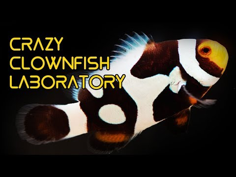 CRAZY Clownfish Laboratory in Taiwan