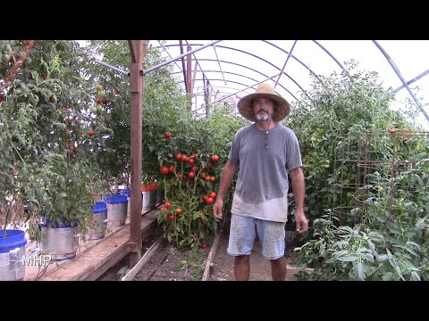 Gardening in a Drought and Homestead Tour