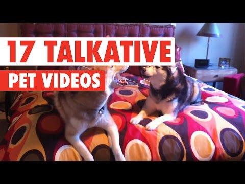 17 Funny Talkative Pets Video Compilation 2017 - UCPIvT-zcQl2H0vabdXJGcpg
