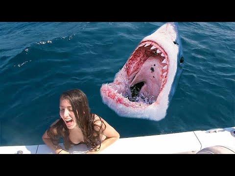 Она Соскользнула в Аквариум к Голодным Акулам — Посмотрите, Что Было Дальше