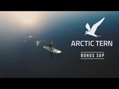 Arctic tern SUP