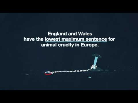 Animal cruelty sentences in England and Wales #NotFunny