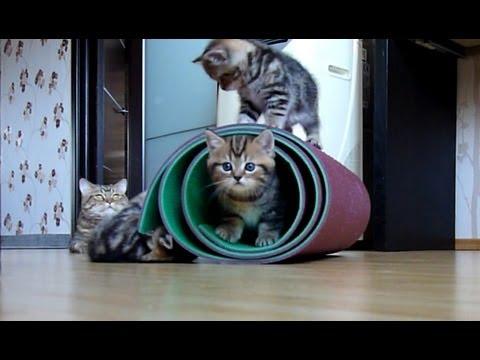 Cutest and funny Kittens playing with mat ( cat ninja tricks ) - UCERQZLRMniqsMlgBxme32cQ