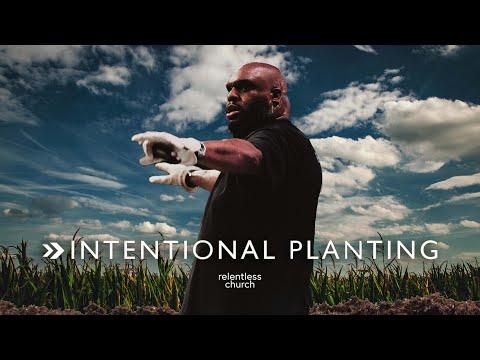 Intentional Planting  John Gray
