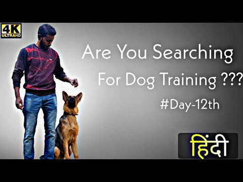Dog Training - Day 12th | How to train your dog Sit on Heel Trick 4k New (Hindi)