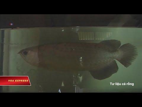 Mang động vật biển vào Mỹ, Việt kiều đối mặt với án tù