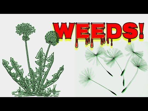 🌿 WEEDING HACK 🌱 WEEDS ARE SMART! 👍ORGANIC WEED CONTROL 🌿