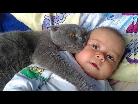MOST Crazy Cats Annoying Babies, If You Laugh You Lose Challenge, Funny Cats Videos by Animals TV - UCBlF_gzRi-SmtUQeXhmZGow