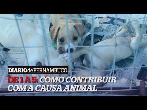 De 1 a 5: Como combater os maus tratos aos animais