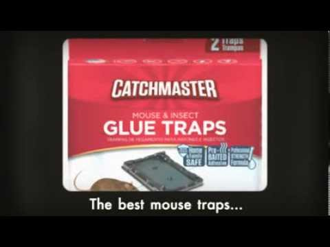 Catchmaster.com Is New and Improved