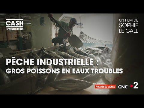 nouvel ordre mondial | Cash investigation - Pêche industrielle : gros poissons en eaux troubles (intégrale)