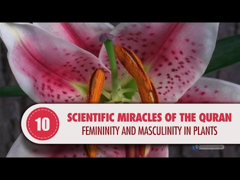 Scientific Miracles of the Quran, 10 - Femininity and Masculinity in Plants