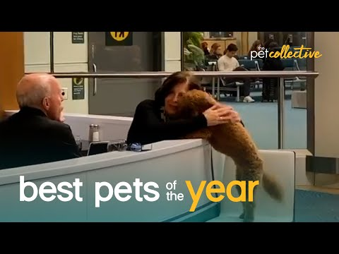 Top 20 Super Cute Pet Moments   Best Pets Of The Year 2020