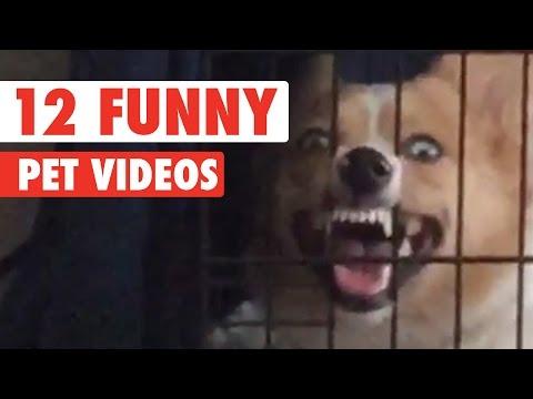 12 Funny Pet Videos Compilation 2016 - UCPIvT-zcQl2H0vabdXJGcpg