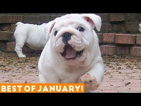 Funniest Pet Reactions & Bloopers of January 2018 | Funny Pet Videos - UCYK1TyKyMxyDQU8c6zF8ltg