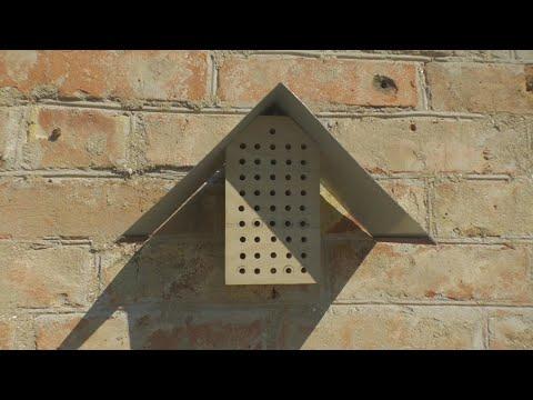 Дом для диких и домашних пчел photo