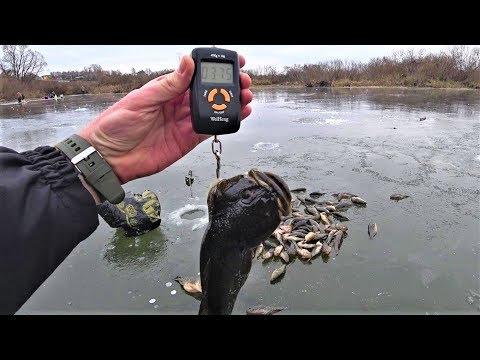 Ловим рыбу на мясо