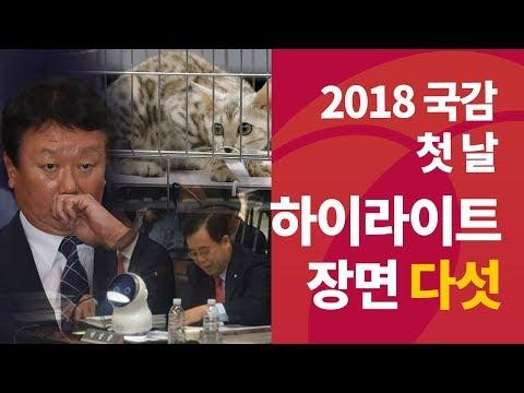 벵갈고양이·선동열… 국감 첫날 하이라이트 장면 '5'