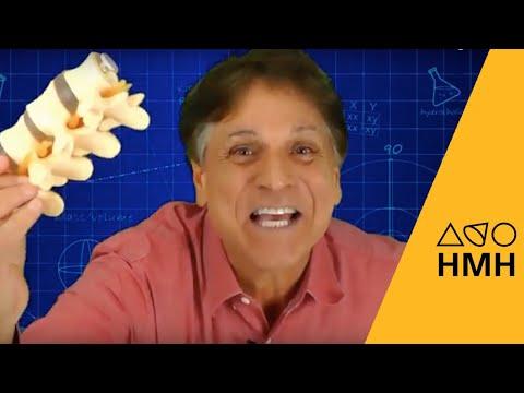 HMH Science Spark | Modeling a Backbone