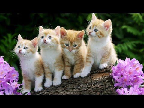 Mom cats and cute kittens funny videos - UCik7tj7UJT7el4Mtmb0PrDA