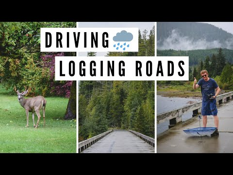 VANCOUVER ISLAND TRAVEL VLOG   Rainy Day Driving on LOGGING ROADS, BC, Canada ?️?