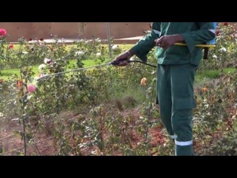 Una escuela de jardinería en Marruecos forma a jóvenes en riesgo social