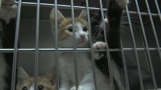 Dozens of animals get second chance at life after being rescued from Rutherford Co. home