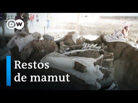 México: esqueletos prehistóricos