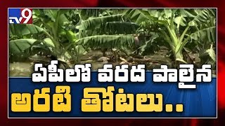 Banana farmers brace for big losses due to floods in AP - TV9