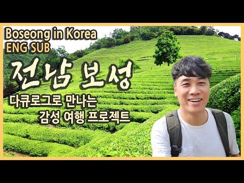 국내여행 전남 보성여행 코스 & 보성 맛집