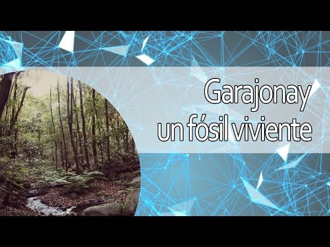 Garajonay: un fósil viviente