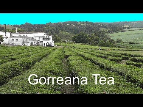 AZORES: Gorreana tea plantation & factory – São Miguel Island