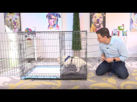Zak George and Modern Puppies - 3 Tips to Train your Puppy FAST - Potty Training Puppy Apartment