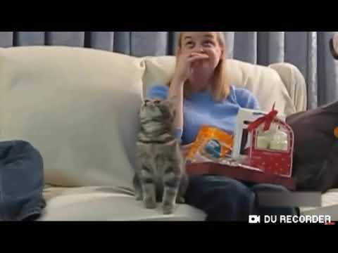 Funny cat videos😂😂😂😂😂😂😂🤣🤣🤣🤣🤣