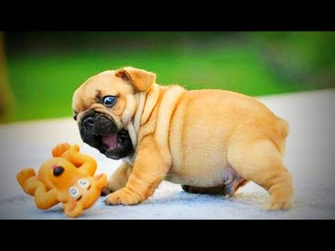 Cute Puppies 😂 Funny Puppies Playing  (Part 1) [Funny Pets] - UCeZe0VwwhEf8KTI2FHfJtTg
