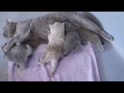 Cute Kittens Fighting Over Their Mom's Milk - 4K footage - UC9LdaAlEyTgo4B0hYViLIhw