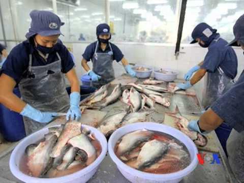 Thượng viện Mỹ sắp bỏ chương trình kiểm tra cá da trơn từ VN