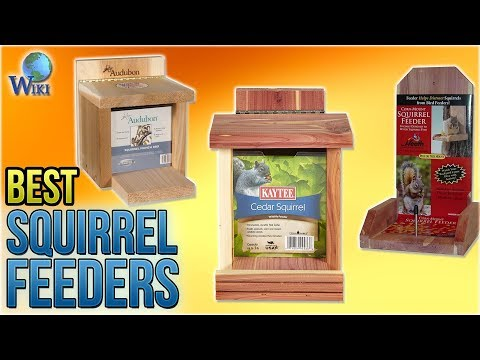 10 Best Squirrel Feeders 2018 - UCXAHpX2xDhmjqtA-ANgsGmw
