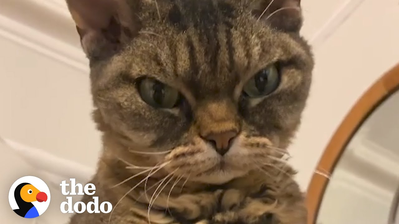 Grumpy, Un-adoptable Cat Is Her New Mom's Shadow | The Dodo Cat Crazy