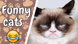 funny cat videos compilation