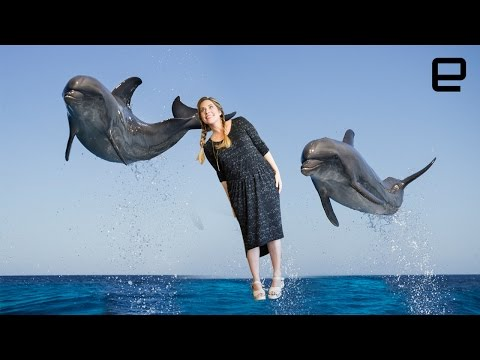ICYMI: Dolphins speak in sentences and brand new bee species - UC-6OW5aJYBFM33zXQlBKPNA