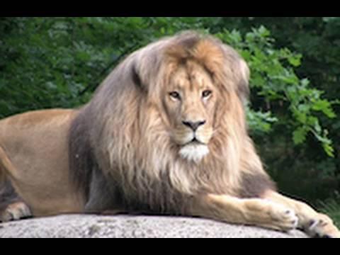 Zoo Leipzig - Africa - UCOJe7abm8byWMR3JUeWk8BQ