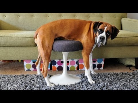 You can't resist laughing while watching animals - Funny animal compilation - UCKy3MG7_If9KlVuvw3rPMfw